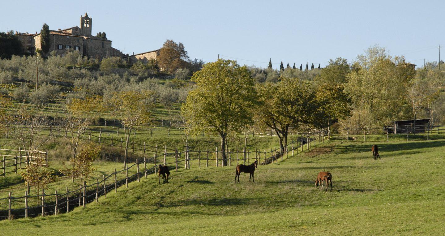 Horse Field at Tenuta degli Dei.