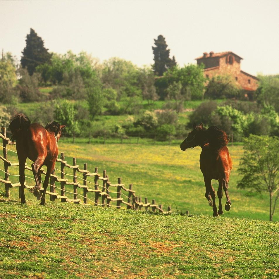 Horse Pen at Tenuta degli Dei.